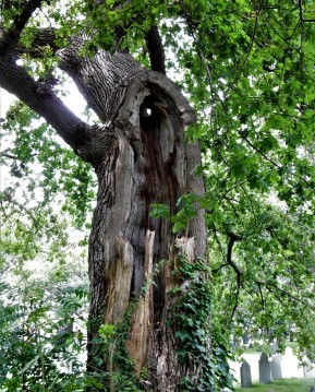 Haunting Tree at the Old Burying Point Cemetery