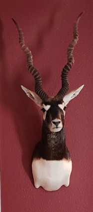 Black Buck Trophy